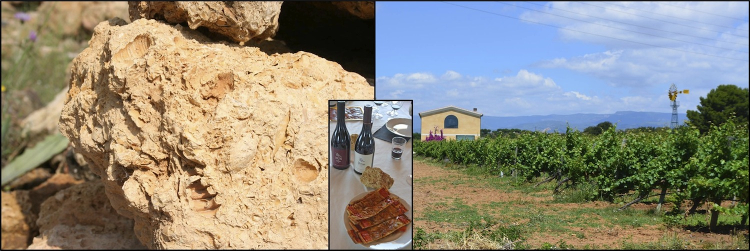 Vinyes del Terrer: Lumaquela soils, maritime Mediterranean climate and dedicating wine growing.
