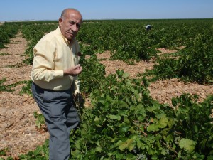 Ángel Rodríguez and his beloved Verdejo vines.